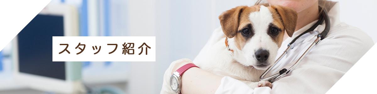 阿佐ヶ谷にあるダリア動物病院のスタッフ写真です。